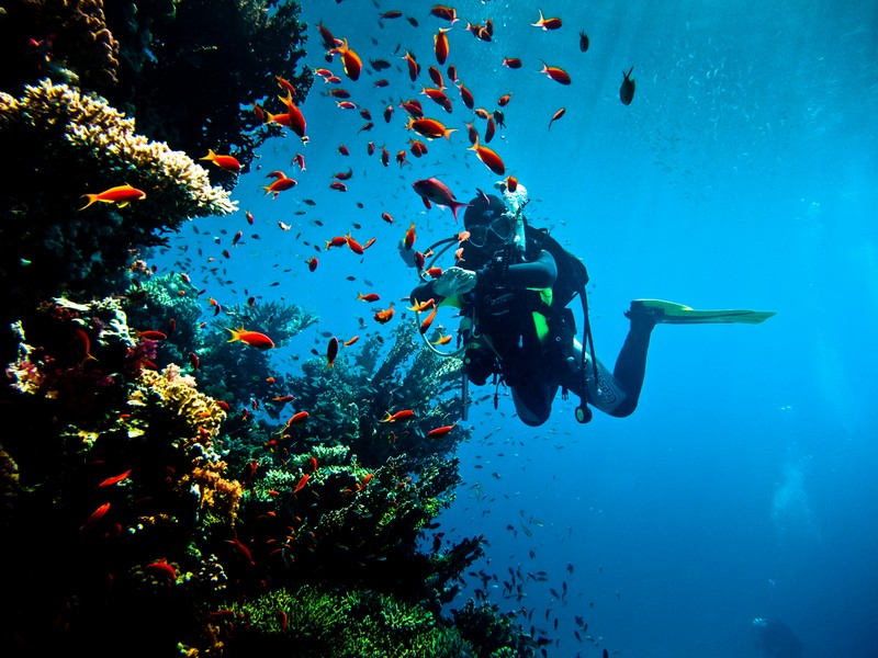 Запрет на дайвинг с плавательных средств в Египте
